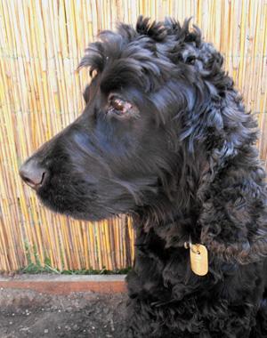 gravírozás névtábla kutya nyakába