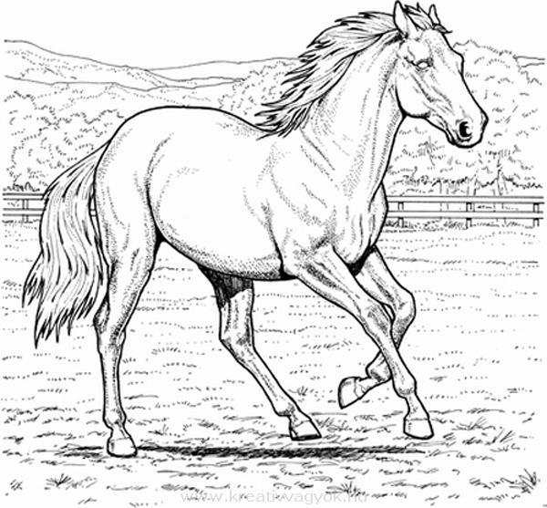 Раскраска лошади бесплатно
